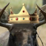 Profile photo of Moose King