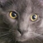Profile photo of amnorris